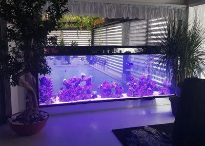 akwarium_morskie_przy_basenie1